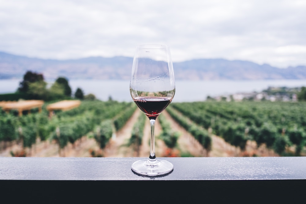Glass of red wine with vineyards in the background
