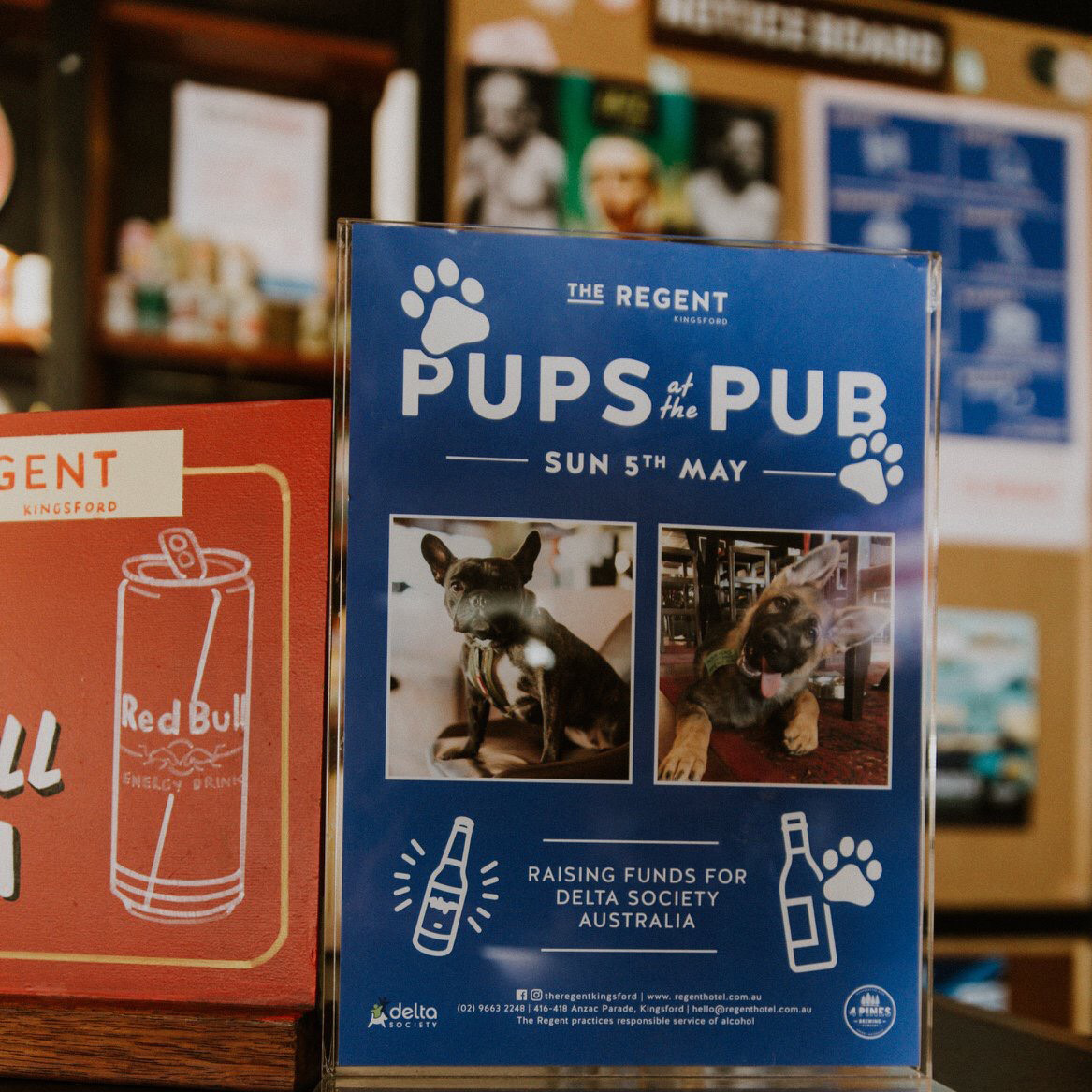 regent pups at the pub poster design
